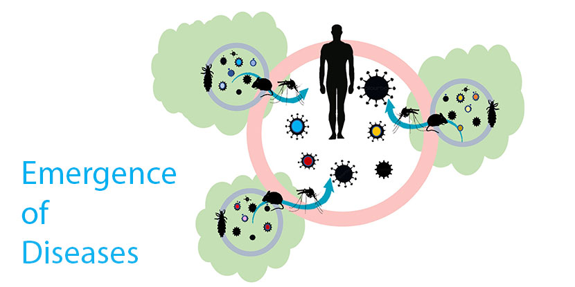 Emergence of Diseases