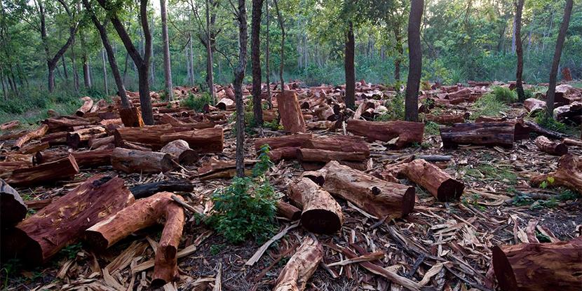 Impact of Deforestation
