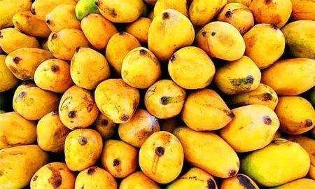 mango grower