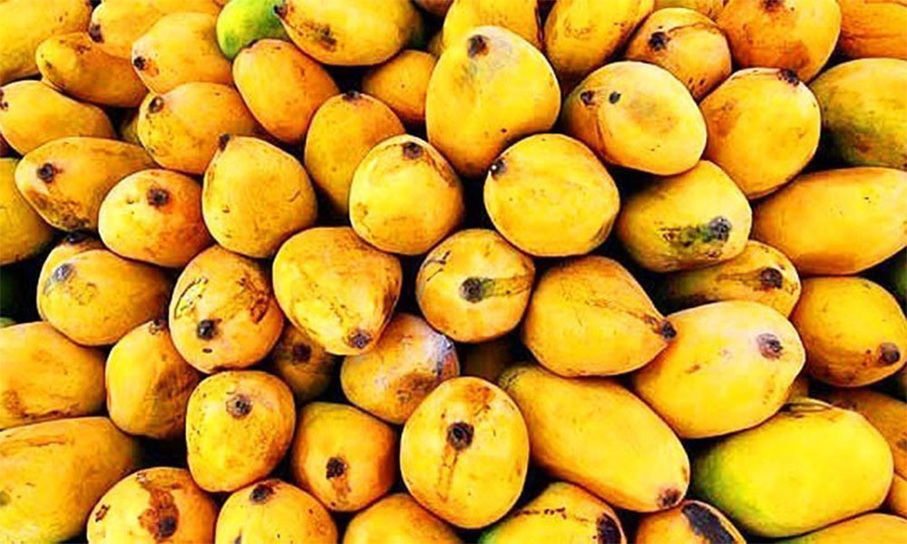 mango grower