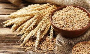 Government import wheat