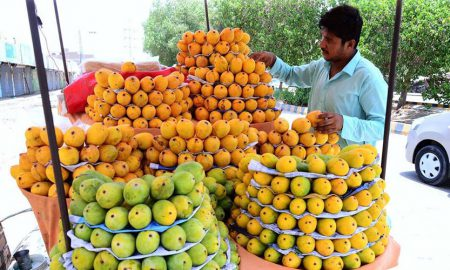 Man selling Pakistani mangoes