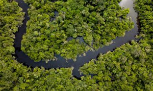 World Rainforest Day