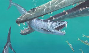 saber-toothed fish