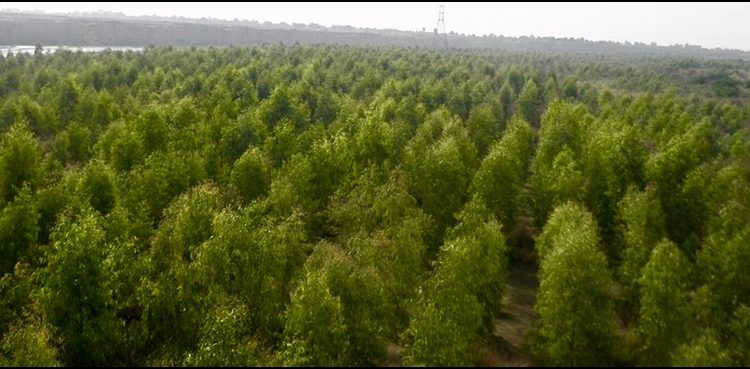 Pakistan climate goal