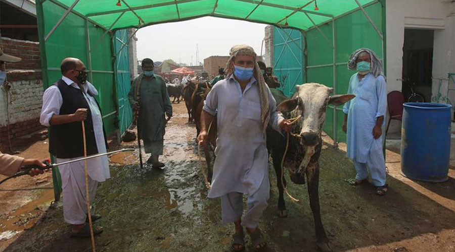 cattle markets