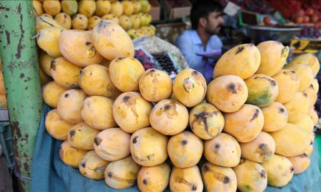 Japan import of mangoes