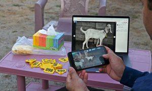 sacrificial animals online