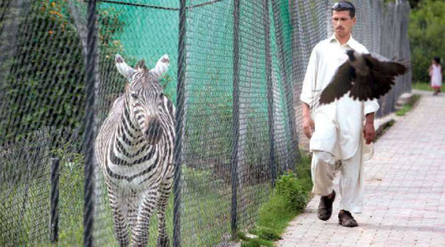 Animals in cages Islamabad High Court