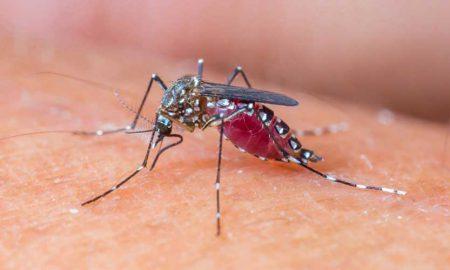 Dengue larvae found Rawalpindi