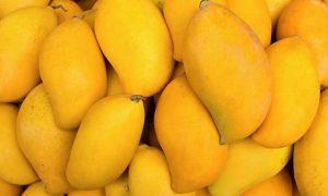 Pakistan mango export target