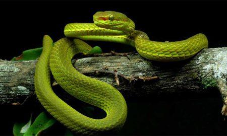 snake Harry potter Salazar