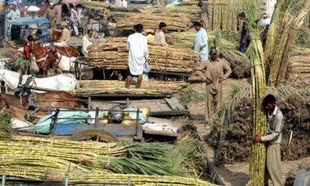 Punjab 44 Sugar Mills