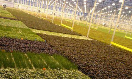 tech based farms