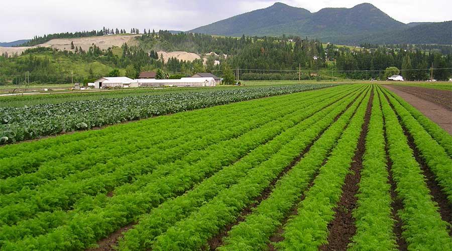 Organic fertilizer raise yield