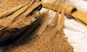 Punjab K-P wheat