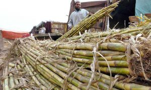 Sindh delaying sugar crushing