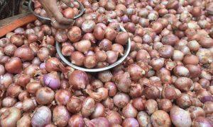 PFVA onion export