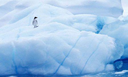 Antarctica coronavirus
