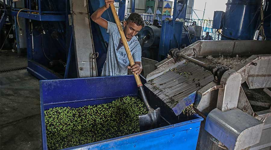 olive extraction plants