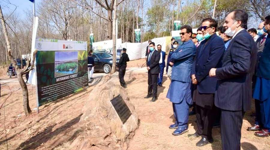 Islamabad Plantation Miyawaki