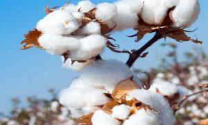 yarn import