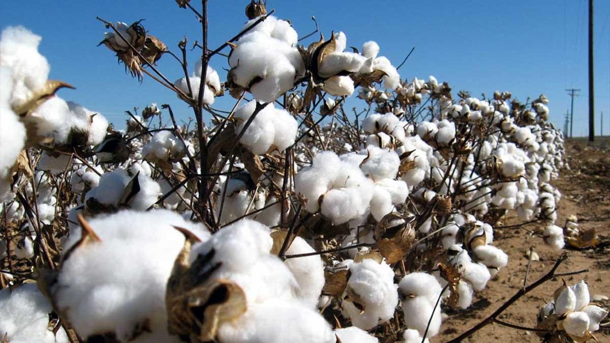 Cotton imports