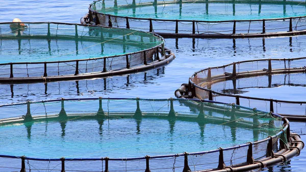 aqua business park