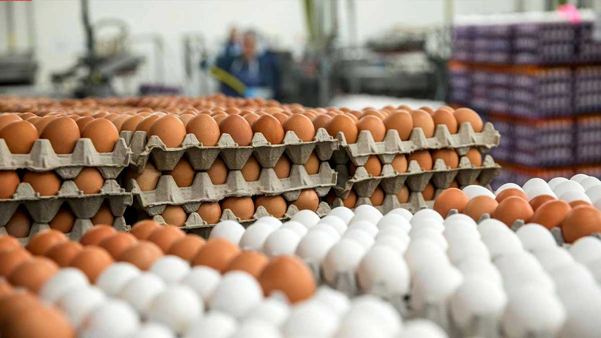 chicken and egg prices
