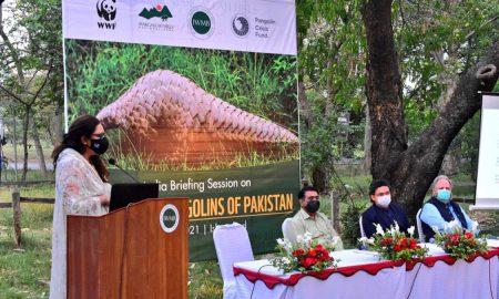 pangolins Pakistan