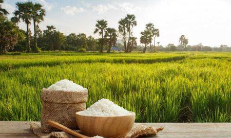 Pakistan rice