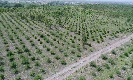 Punjab barren land