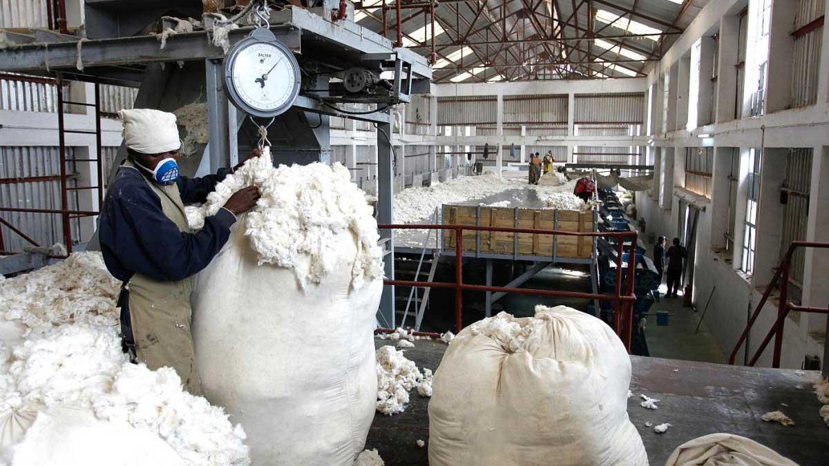 cotton intervention price