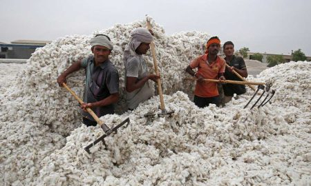 delayed Cotton imports