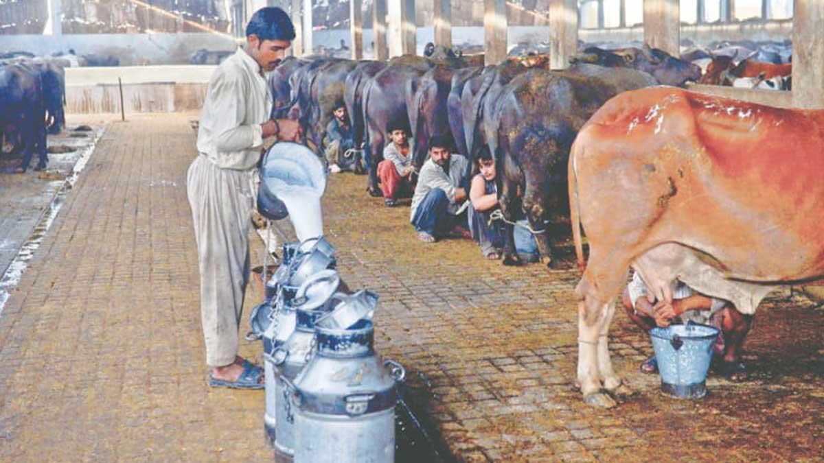 helpline dairy farmers