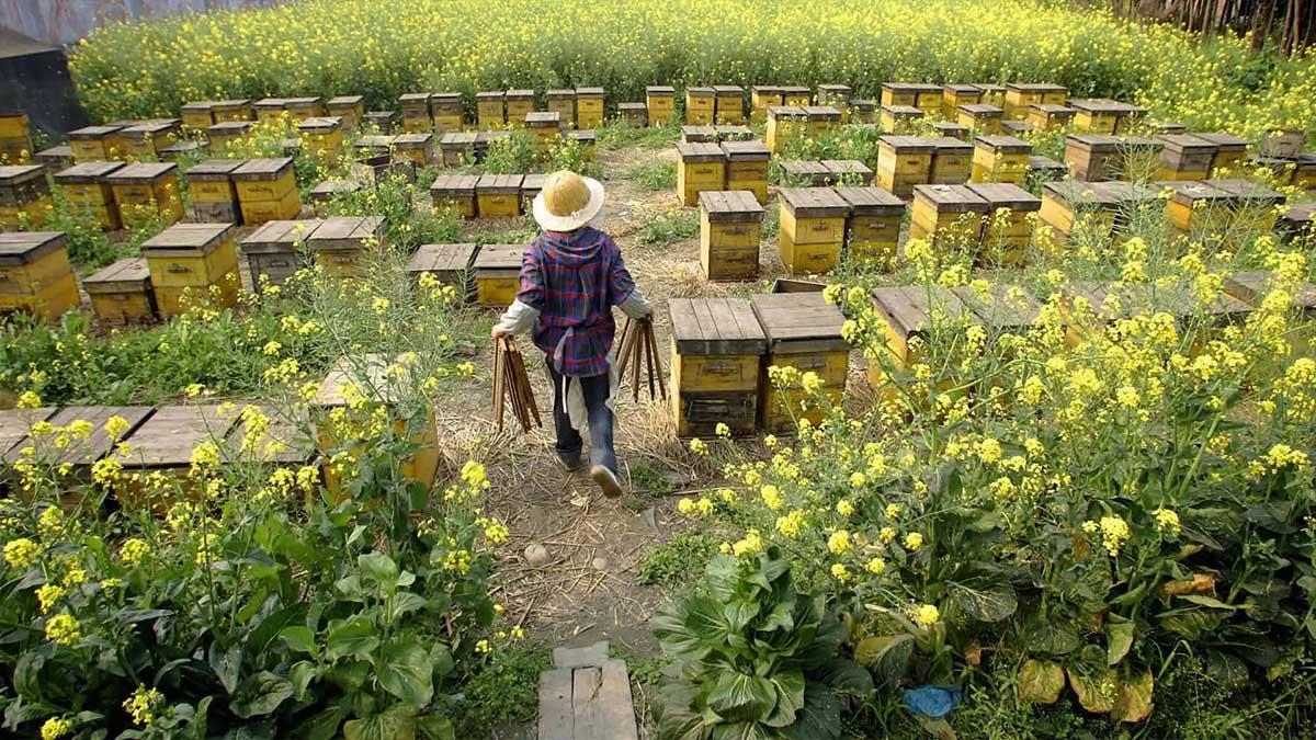 Honey bee farm