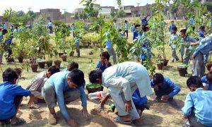 planting saplings in Faisalabad
